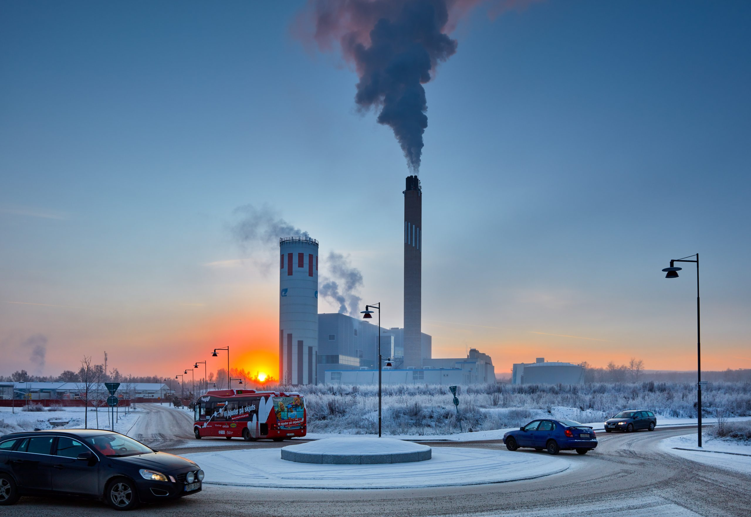 Bäckelund plant in sunset